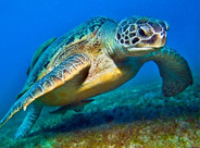 Save the Sea Turtle Fund
